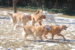 Roxy, Kodi, Riley, Copper, and Max enjoy their weekly get together;  Sumner fosters